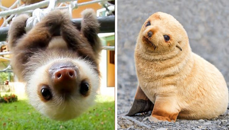 These Baby Animals That Are Too Cute To Be True Nature Love