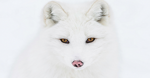 7 Of The Most Breathtakingly Beautiful Fox Species In The World