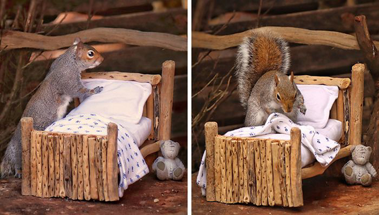 Woman Makes An Adorably Tiny Bed For Squirrels In Her Garden