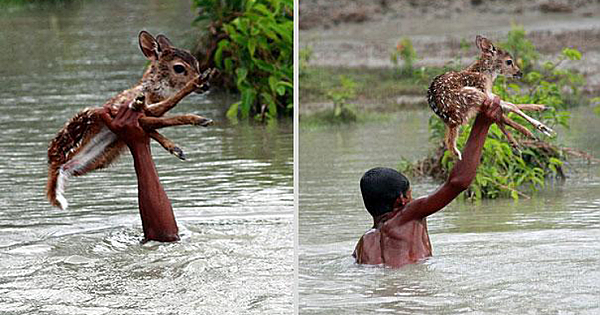 Heroic Boy Risks His Life To Save A Drowning Baby Deer