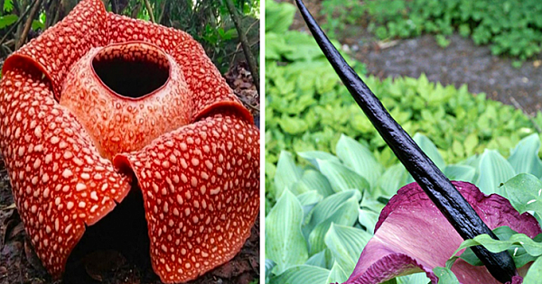 11 Strange Plants You Definitely Didn't Know Existed In The World