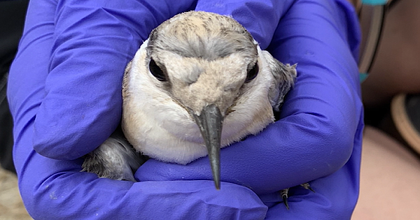 Endangered And Threatened Birds Receive Vital Help From SeaWorld San Diego
