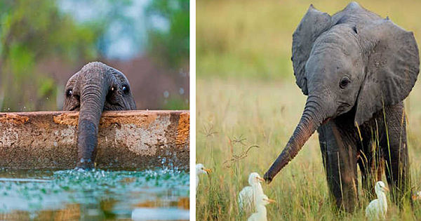 These Adorable Photos Of Baby Elephants To Brighten Up Your Day