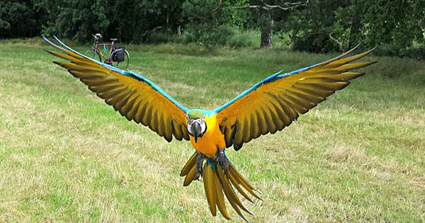 Hunter Shot Macaw Out Of The Sky Just For Fun. Sing In To His Punishment Petition