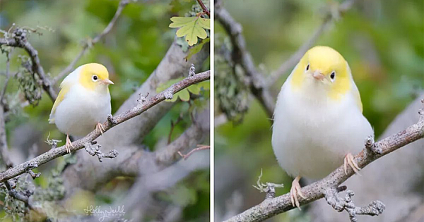 Adorable Rare White Tauhou Caught On Camera By Eagle-Eyed Photographer