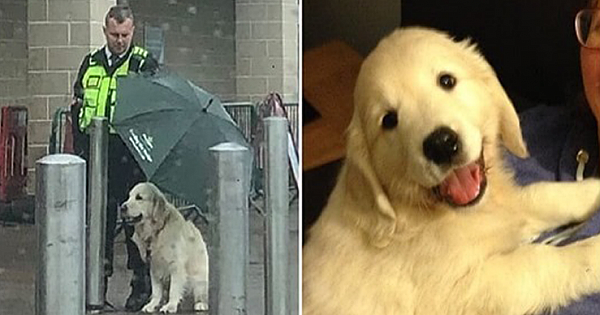 Kind Security Guard For A Morrisons Store Goes Viral For Shielding A Waiting Dog From The Rain With His Umbrella