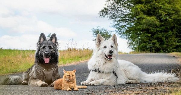 """We Saved A Kitten, The Dog Helped Us To Raise Him, And Now The Cat Thinks He's A Dog, And It's Just Adorable"""