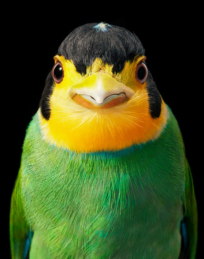 11 Rare And Endangered Birds That Look Simply Stunning
