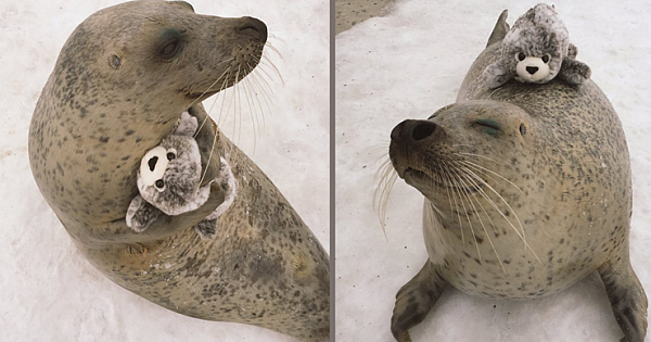 """An Earless Seal Can't Stop Hugging A Stuffed """"Mini-Me"""" Toy That Looks The Same"""
