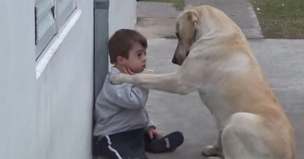 Dog Approaches Boy With Down Syndrome And Befriends Him (Video)