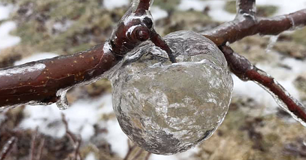 Photos Of Frozen 'Ghost Apples' Are Going Viral. What Are They?