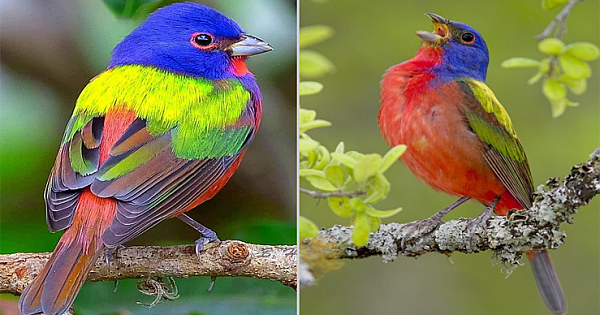 Rainbow Birds Perfectly Match Their Name With Their Amazing Feathers