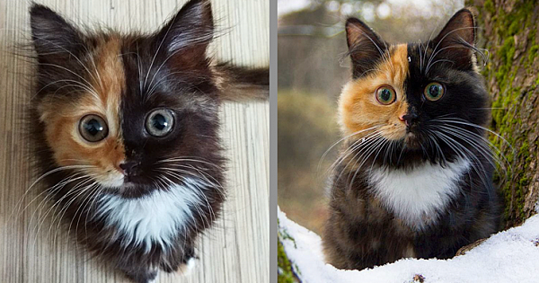 Meet Yana – Mother Nature's Remarkable 'Two-Faced' Feline Creation