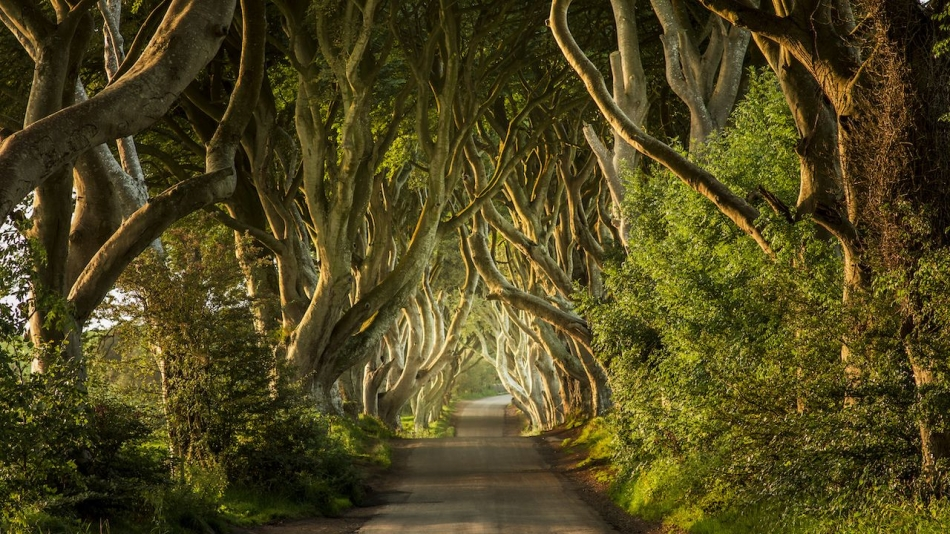 24 Spectacular Unique Trees And Forests Around The World