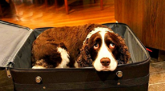 Husband Sneaks Dog Into Hospital In A Suitcase So His Dying Wife Can Say Goodbye