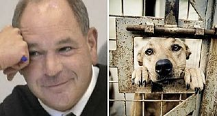 Ohio Judge Is Fed Up With Animal Abusers, Decides To Gives Them A Taste Of Their Own Medicine
