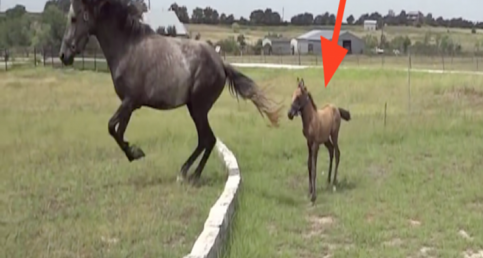 The Baby Can't Make The Jump, But Watch What Mom Does