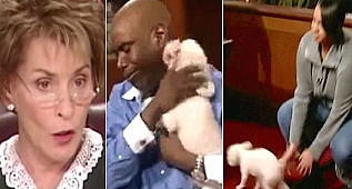 Judge Judy Lets Stolen Dog Run Loose In Courtroom To Identify His One True Owner